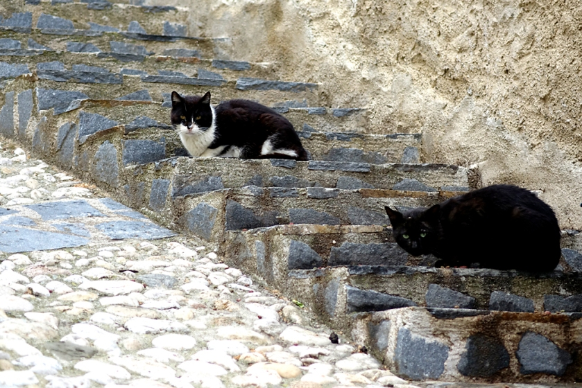 _DSC3120-feral cats