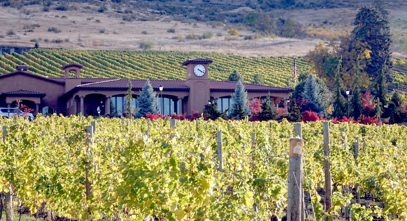 Tsillan Cellars Vineyard - Lake Chelan